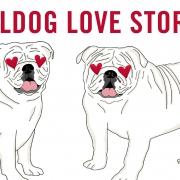 Bulldog Love Stories Graphic