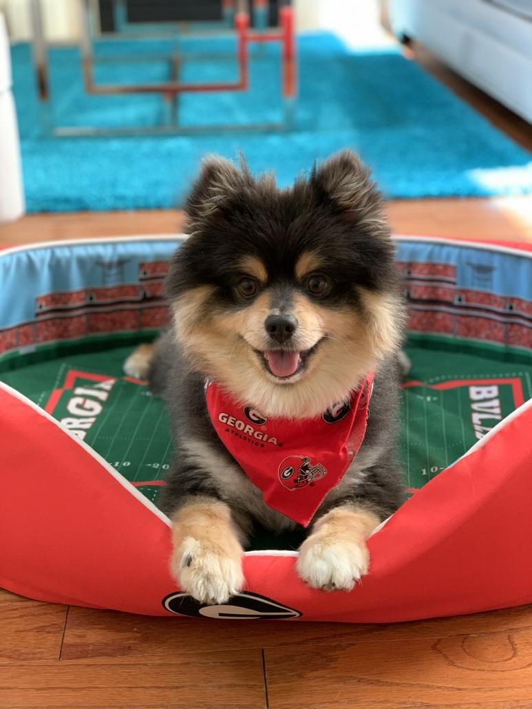 Wendy Hsiao's Dog