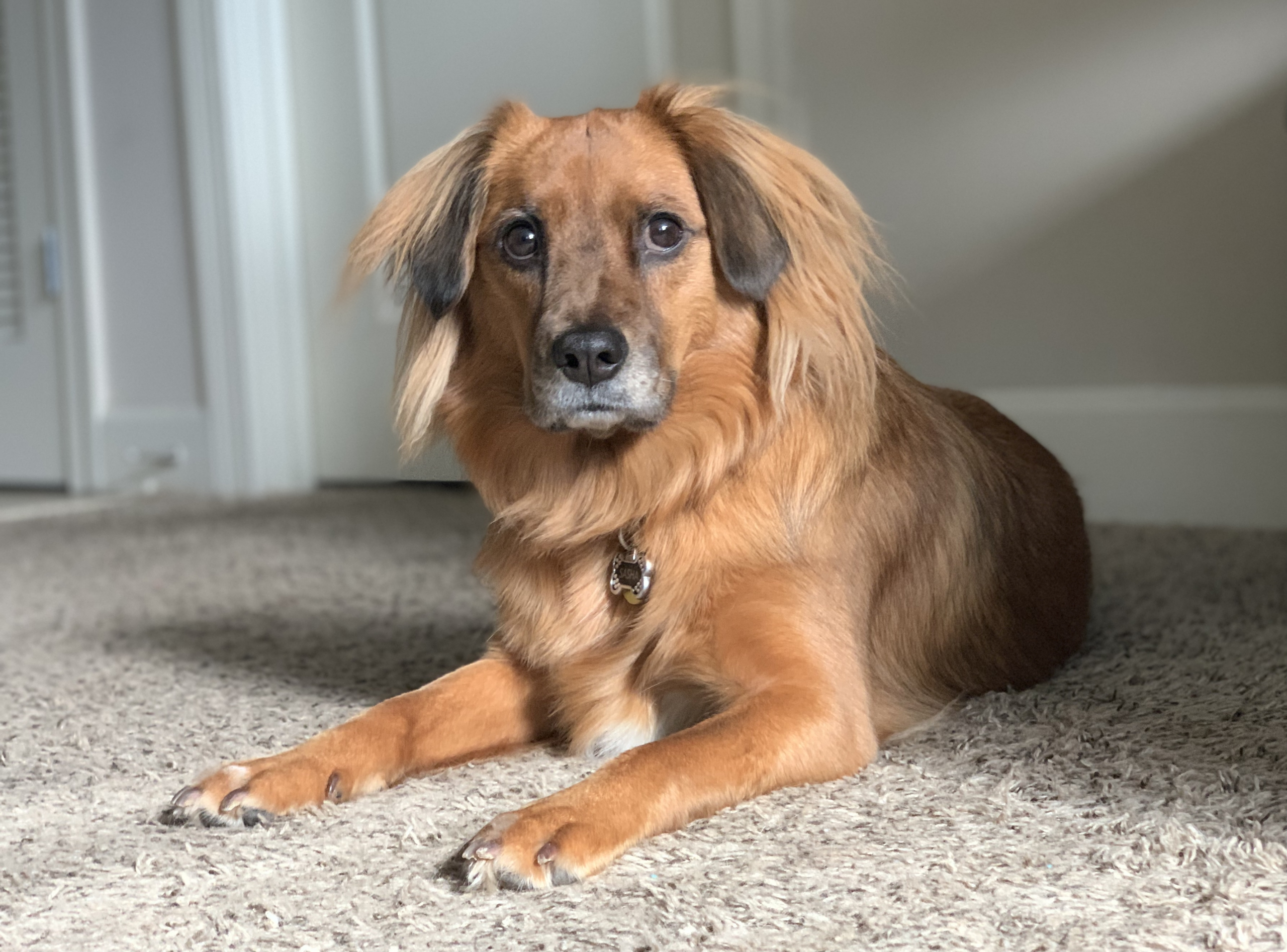 Kelcie Willis's Dog