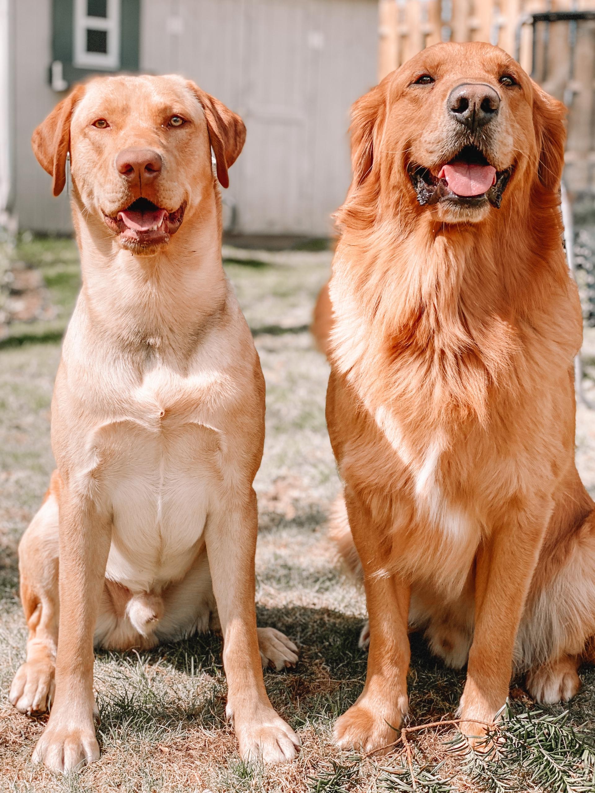 Anna MacKenzie Clark's Dogs