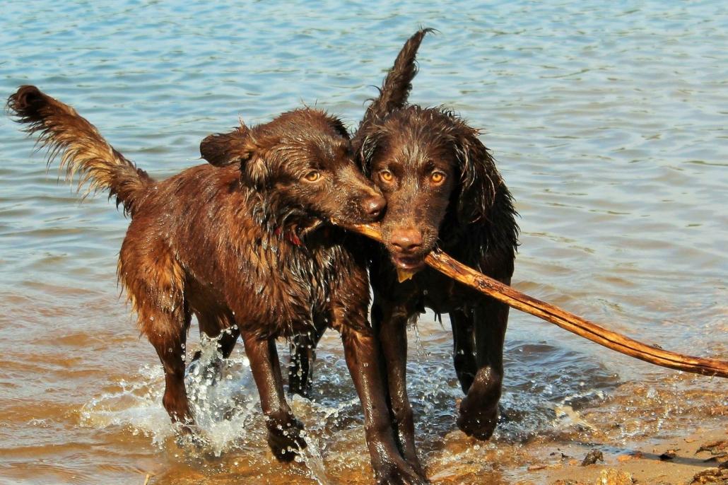 Kristin Joyner's Dogs