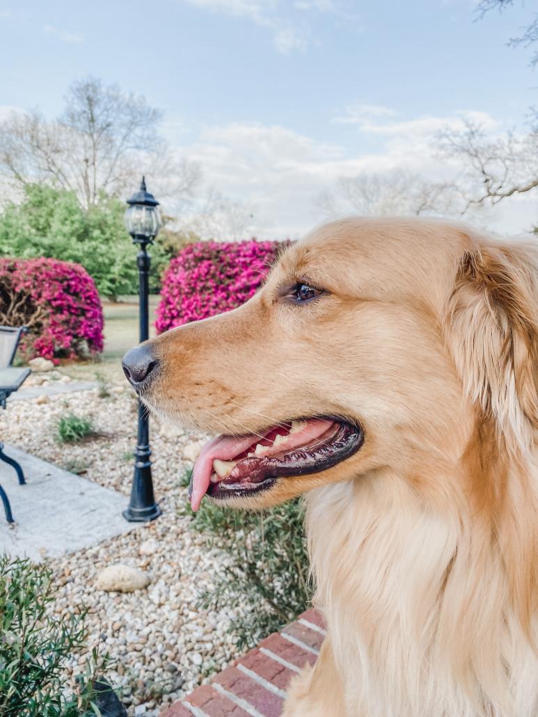 Carolina Brown's Dog