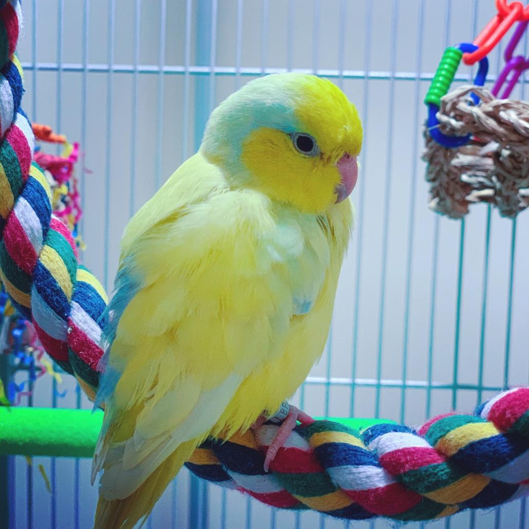 Kim Wuenker Eilers's Parrot