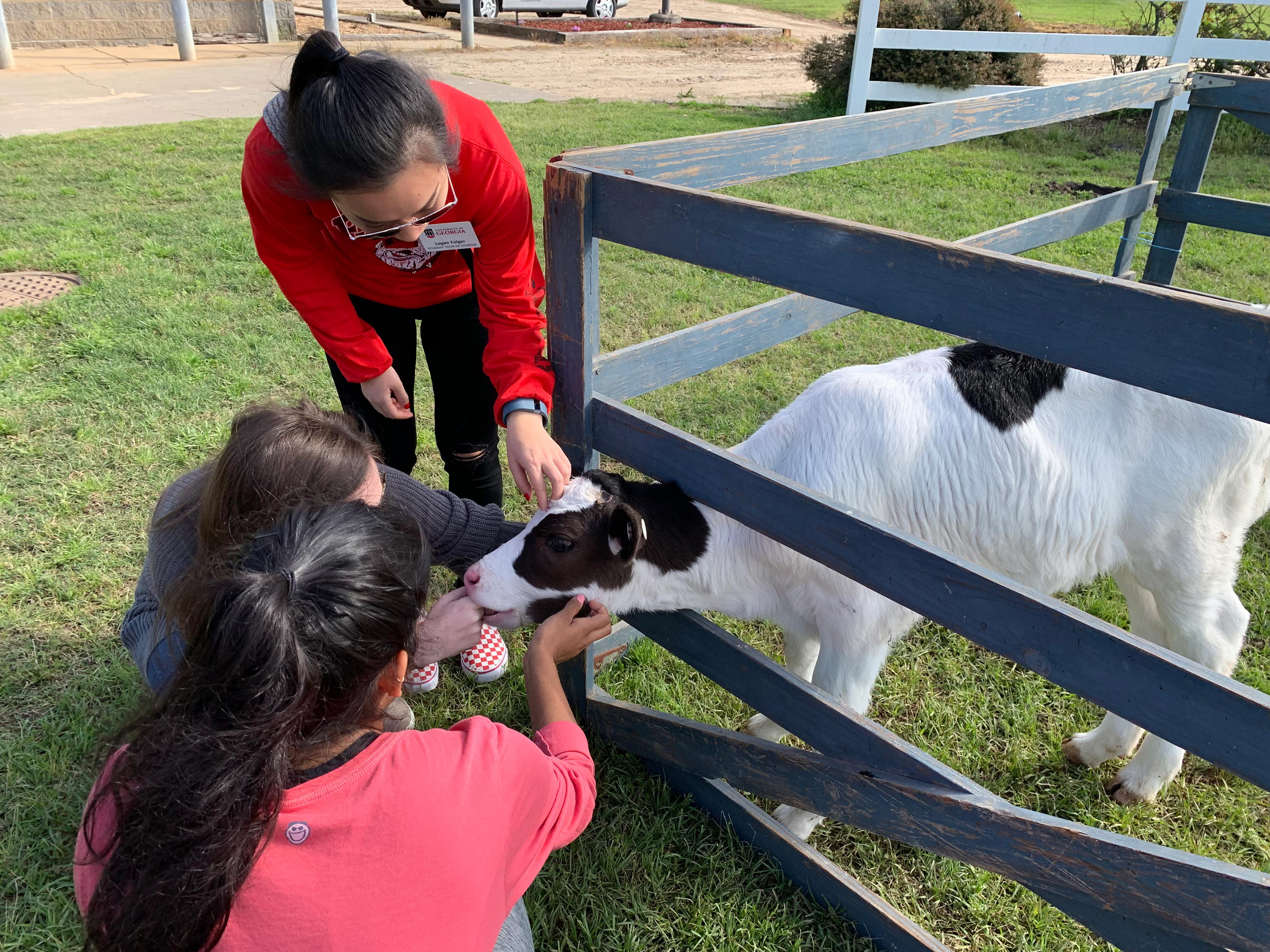 Students pet baby cow at UGA's dairy research facility.