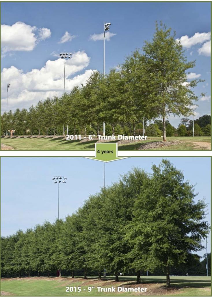 IM Fields Tree Progression