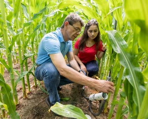 (L-R) Professor George Vellidis and graduate student Anna Orfanou check the circuit board of a UGA Smart Sensor Array node in an experimental crop field on the Tifton campus.